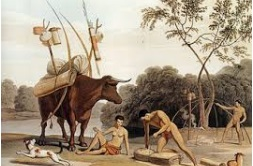 witmense - koi en san